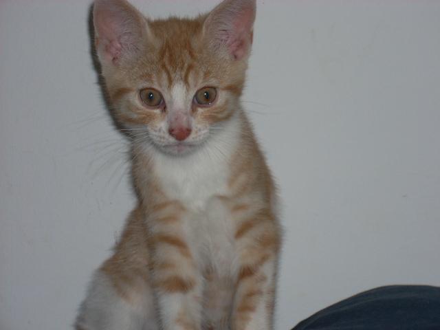 Mon nouveau chat - Page 3 Photo-010-1e309ed
