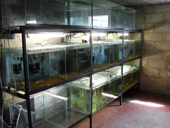 ma shrimproom et fishroom Sdc12114-1d57ef0