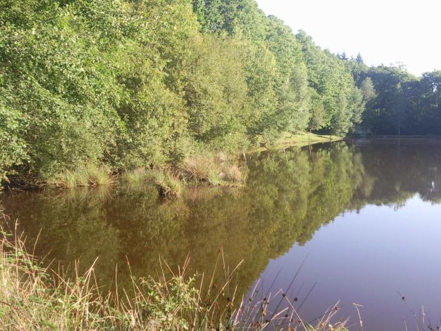 Pêche en haute vienne, la bénéchie ( cussac, chalut) Photo0042-121f4dc