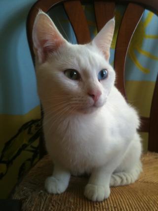 Choupi - 1 an - Blanc - LES PACHAS ( dpt 35 / 56 ) Img_9058-1e1f0b1