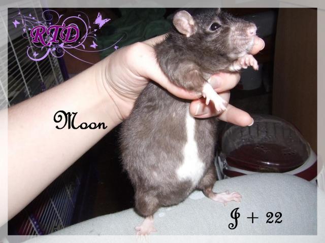 Portée Moon x Malabar, des petits chanceux Dscf8786-72789f