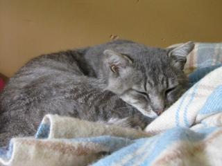 Spider chat tigré gris mâle FIV+ de 08/2005 - dpt 56 Img_0337-1f4be1d