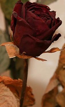 ����� ������ ����� ���� mtm_bloemen-243-2...
